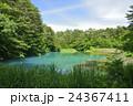 五色沼 裏磐梯 青沼の写真 24367411