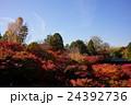 世界の絶景。東福寺の紅葉 24392736
