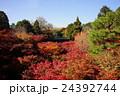 世界の絶景。東福寺の紅葉。 24392744