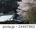 桜吹雪 寺 桜の写真 24407862