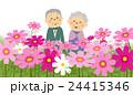 コスモス畑 シニアカップル 24415346
