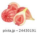 無花果 いちじく フルーツのイラスト 24430191
