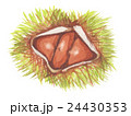 栗 秋の味覚 毬栗のイラスト 24430353
