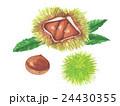 栗 秋の味覚 毬栗のイラスト 24430355