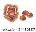 栗 秋の味覚 毬栗のイラスト 24430357
