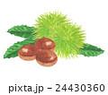 栗 秋の味覚 毬栗のイラスト 24430360