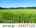 夏の水田 24437122