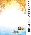 オシドリと秋のモミジの紅葉 24440888