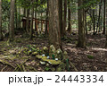 針葉樹の森 24443334
