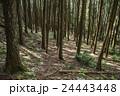 杉林 森 針葉樹林の写真 24443448