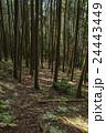 杉林 森 針葉樹林の写真 24443449