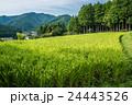 真夏の山田 24443526