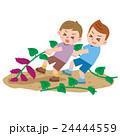 芋掘りをする男の子達 24444559