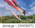 鯉のぼり 24456071