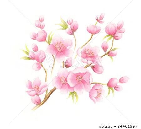 桃の花のイラスト素材 24461997 Pixta