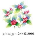 植物 千両 花のイラスト 24461999