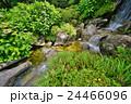 滝 庭園 日本庭園の写真 24466096