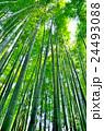 竹林 24493088