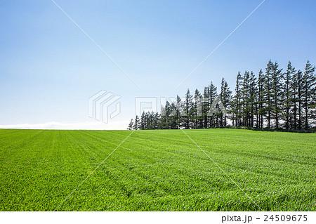 草原 24509675