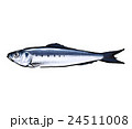 鰯 魚 真鰯のイラスト 24511008