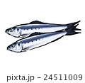 鰯 魚 真鰯のイラスト 24511009
