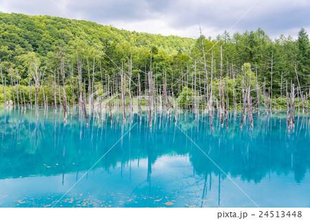 北海道 美瑛 夏の白金青い池 24513448