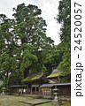 若狭姫神社 千年杉 24520057