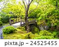 新緑 庭園 日本庭園の写真 24525455
