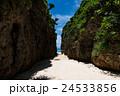 沖縄県 備瀬のワルミ 24533856