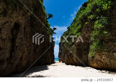 沖縄県 備瀬のワルミ 24533857