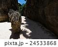 沖縄県 備瀬のワルミ 24533868