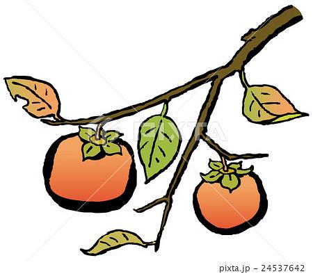 柿のイラスト素材 24537642 Pixta