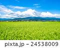【長野県】田園風景と夏空 24538009