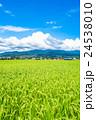 【長野県】田園風景と夏空 24538010