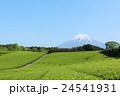 富士山と新緑の茶畑 24541931