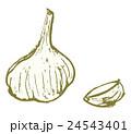 にんにく 大蒜 野菜のイラスト 24543401