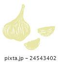 にんにく 大蒜 野菜のイラスト 24543402
