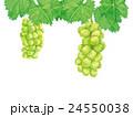 シャインマスカット マスカット 葡萄のイラスト 24550038