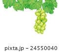 シャインマスカット マスカット 葡萄のイラスト 24550040