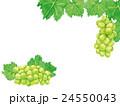 シャインマスカット マスカット 葡萄のイラスト 24550043