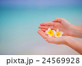Beautiful frangipani flowers background turquoise 24569928