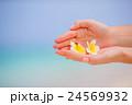 Beautiful frangipani flowers background turquoise 24569932