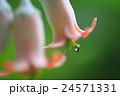多肉植物の花に小さな昆虫 24571331