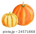 西洋カボチャ かぼちゃ 水彩のイラスト 24571668
