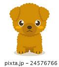 トイプードル トイプー 犬のイラスト 24576766