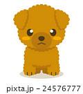 トイプードル トイプー 犬のイラスト 24576777