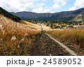 仙石原 秋のすすき草原 奥側からの風景 24589052