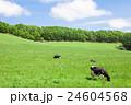 乳牛 ホルスタイン 酪農の写真 24604568