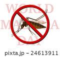 蚊 カ 虫のイラスト 24613911