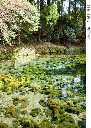 南阿蘇村・白川水源の写真素材 [24614911] - PIXTA